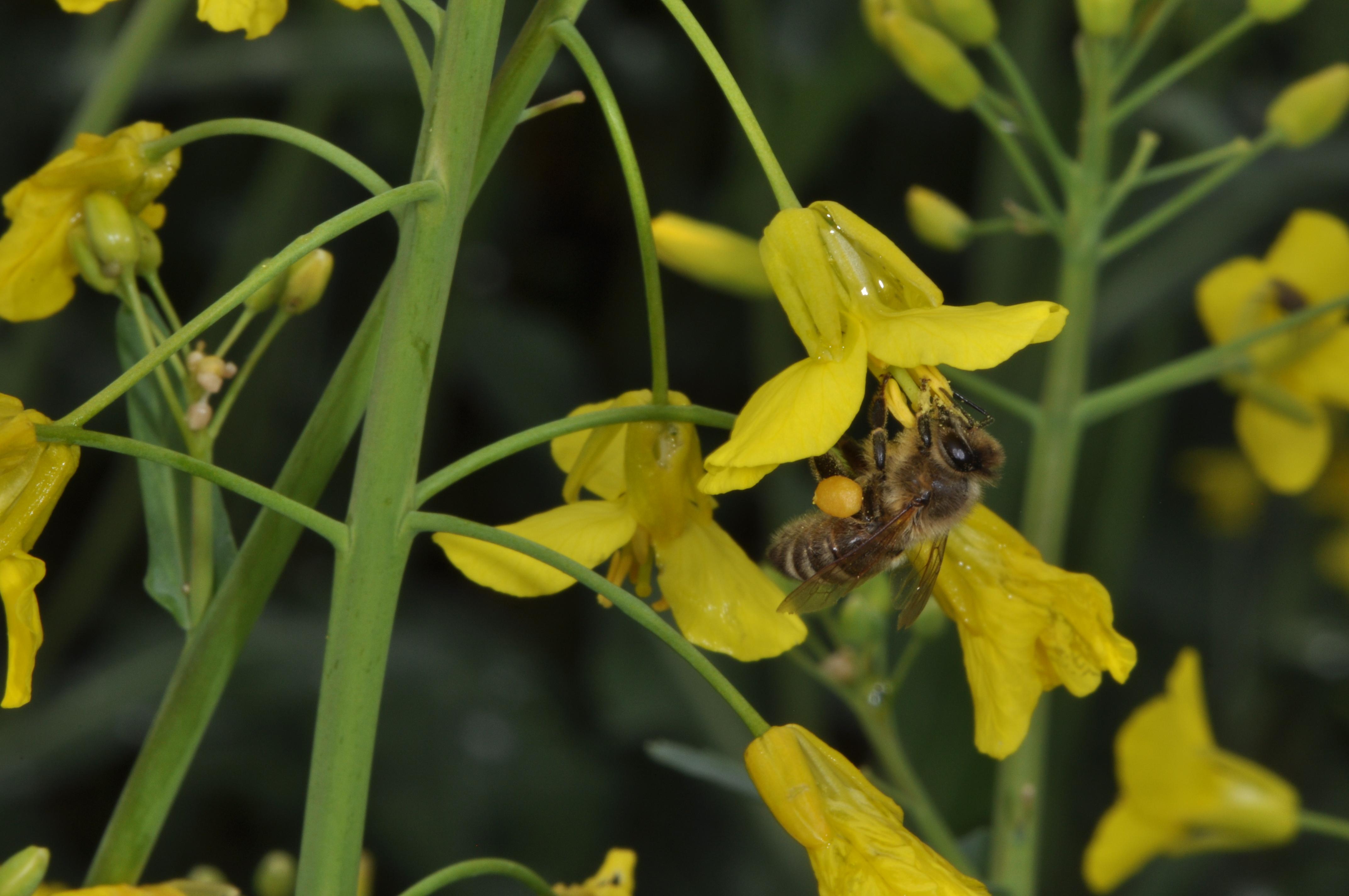 Programme de sauvetage des abeilles dans le canton de for Ouvrir un lien dans une nouvelle fenetre html