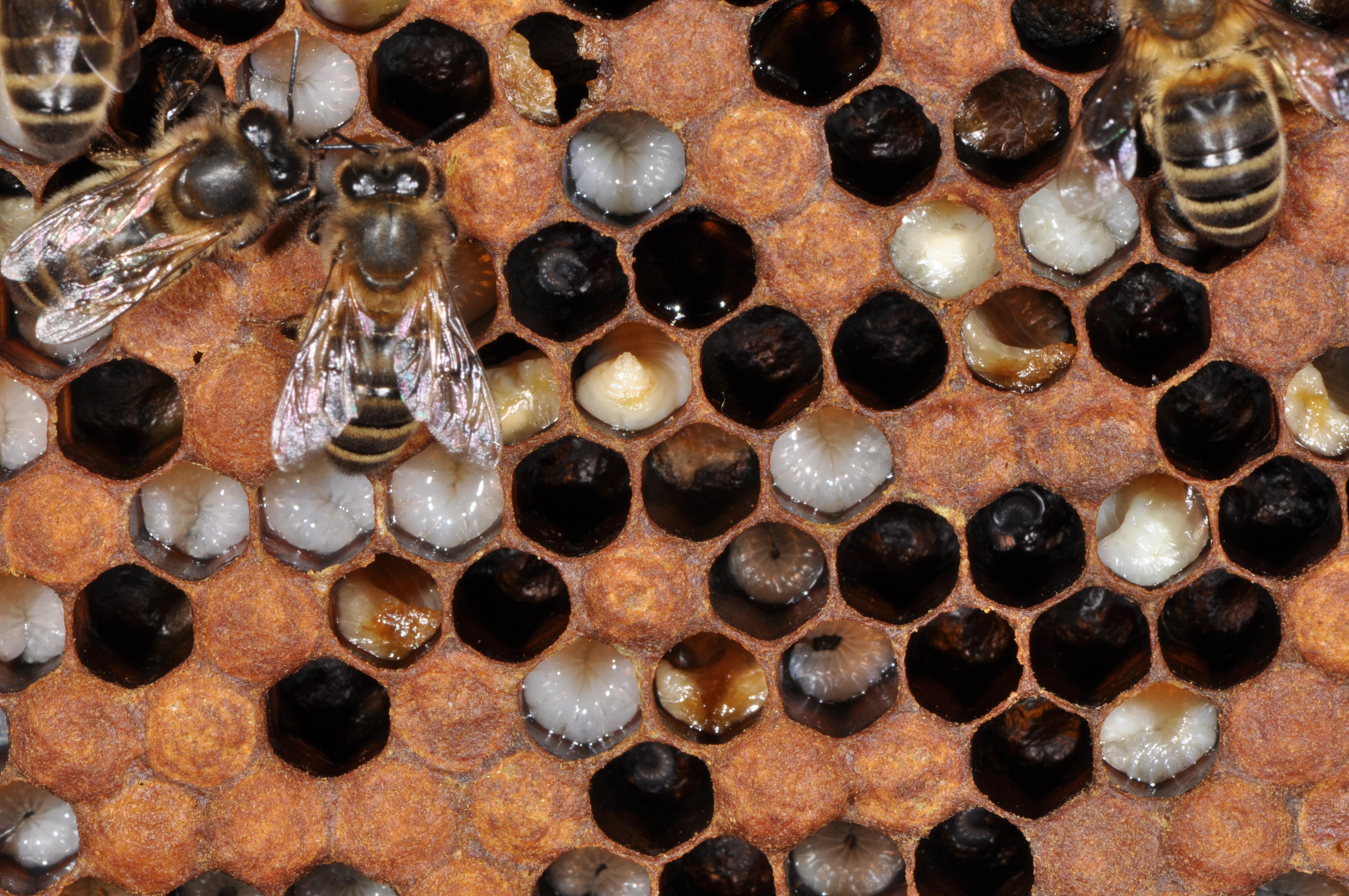 Programme de sauvetage des abeilles dans le canton de for Code html lien nouvelle fenetre